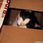 2000-07-19 - 2000 - Grouik in a box
