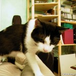 2000-07-19 - Grouik on the sofa