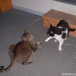 2002-04-13 - Milou and Grouik playing