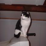 2002-04-13 - One of Grouik's spots