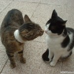 2002-04-13 - Milou and Grouik nose kissing
