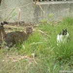 2002-04-13 - Milou and Grouik exploring