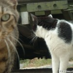 2002-04-13 - Milou and Grouik