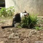 2002-04-13 - Grouik enjoying some fresh grass