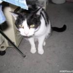2004-01-01 - Grouik looking for food