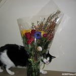 2005-04-16 - Grouik inspecting flowers