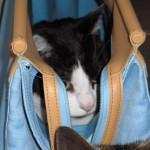 2005-04-17 - Grouik in a bag