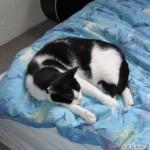 2005-04-30 - Grouik sleeping on the bed