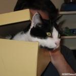 2005-07-02 - Grouik in a shoe box