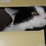 2005-07-02 - Grouik enjoying his box
