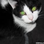 2005-07-09 - Grouik looking at his human