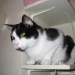 2005-07-23 - Grouik on a shelf
