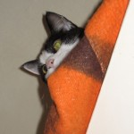 2005-08-13 - Grouik hiding