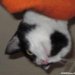 2005-08-15 - Grouik from his secret hiding spot