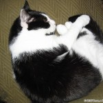 2005-09-02 - Grouik sleeping