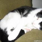 2005-09-02 - Grouik napping