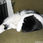 2005-09-03 - Grouik sleeping