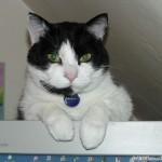2006-03-13 - Grouik monitoring his human