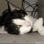 2006-04-08 - Grouik after some catnip