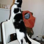 2006-06-16 - Grouik asking for noms