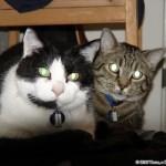 2006-06-25 - Grouik and Milou
