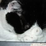 2006-08-03 - Grouik sleeping