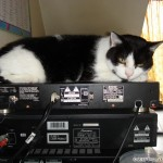 2006-08-05 - Grouik monitoring his human