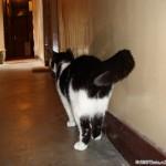 2006-08-06 - Grouik exploring the corridor