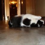 2006-08-06 - Grouik plaing on the floor