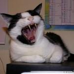 2006-08-06 - Grouik's yawn