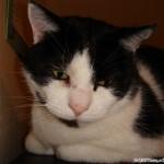 2006-08-07 - Grouik observing his human