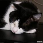 2006-08-07 - Grouik napping