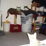2006-08-13 - Milou, Grouik and tiny Texas