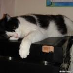 2006-08-16 - Grouik sleeping