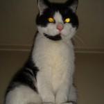 2006-08-17 - Grouik monitoring his human