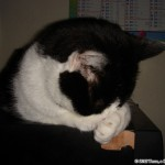 2006-09-20 - Grouik sleeping