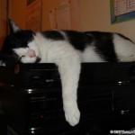 2006-09-22 - One of Grouik's sleeping spots