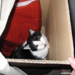 2006-09-26 - Grouik in a box