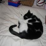 2006-10-08 - Grouik napping