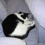 2006-10-09 - Grouik enjoying the couch