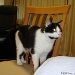 2006-10-19 - Grouik (begging for food?)