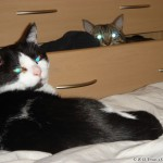 2006-10-27 - Grouik and Milou choosing napping spots