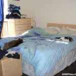 2006-11-01 - Milou and Grouik napping