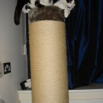 2006-11-09 - Grouik on the scratch post
