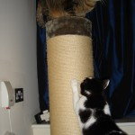 2006-11-09 - Milou and Grouik playing with their scratch post