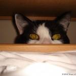2006-11-11 - Grouik playing hide and seek