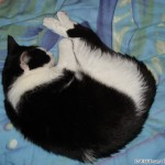2007-01-15 - Grouik napping