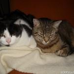 2007-02-17 - Grouik and Milou
