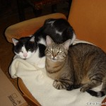 2007-02-17 - Grouik and Milou cuddling