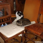 2007-03-04 - Grouik and Milou choosing nap spots
